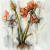 A radiant bundle of fascinating contradictions: amaryllis