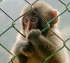 kinesthetic chutzpah: monkey