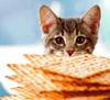 Cat Passover