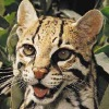 Stray Cat: dork