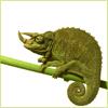 Mrs. Christie: chameleon