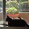 moly in window