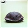 eek turtleshell ~obsessiveicons