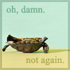 turtle not again ~obsessiveicons
