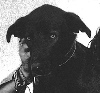 buddhisthotdog userpic