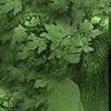 greensidhe userpic