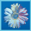 tropicaldaisy userpic