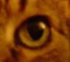 dortilolma userpic