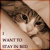 sweetmeredith userpic