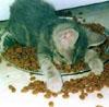 kittenfood, facepalm