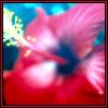 calliopetrance userpic