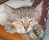 sleeping, sleepy, kitten, Zora