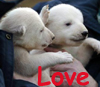 Beth H: Bear Love (bbb)