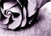 emo_occasion24 userpic