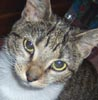 Feline Philadelphians