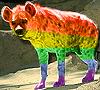 yeena pride rainbow