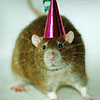 Rat: Party Hat