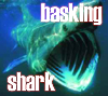darcydodo: basking shark