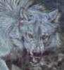 blackrainwolf userpic