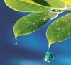 Rain - leaves