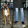 girls - dogs on docks