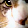 mazzycat userpic