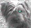 bonemead userpic