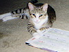 sappho_the_cat userpic