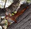 hemp_squirrel userpic