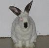 billperegoy userpic