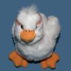 staring duck