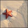 Beach: Starfish