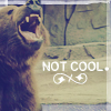 bears are not cool - scrunchy