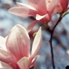 bc145 userpic