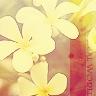 royalflower userpic