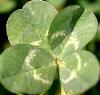 Ricky Buchanan: Four-leaf Clover