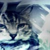 spooky_kitty userpic