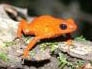 friendoffrogs13 userpic