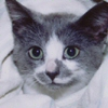 penelope_cat userpic