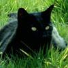 blackcatabyss userpic