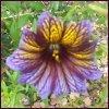 Catherine: purple flower