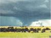 stormy, australia