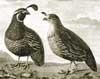 birding-common
