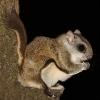 igoforsquirrels userpic