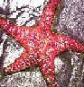 sparklystarfish userpic