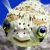 fish'ka