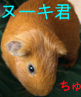 ookii_risu