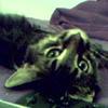 doomcookie userpic