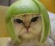 disgruntledmonk userpic