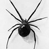 evo_spider userpic